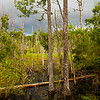 The diversity of the marsh along the Palmetto Boardwalk