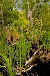 More mixed flora in the marsh along the Palmetto Boardwalk