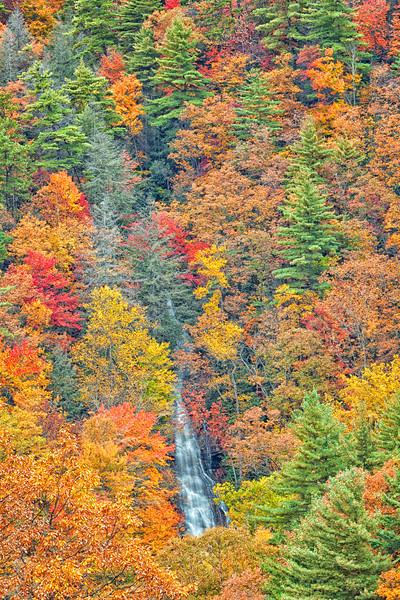 Nantahala National Forest, North Carolina.