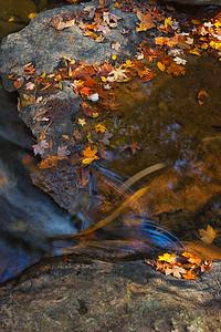 Eno River, Pump Station Trail.  North Carolina.
