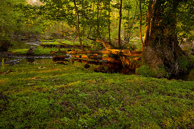 Triangle Land Conservancy wetlands near Mark's Creek, North Carolina.