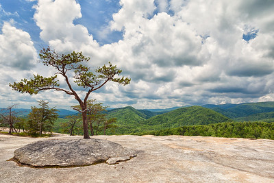 A single tree grows out of the granite on Wolf Rock, in Stone Mountain State Park, North Carolina.
