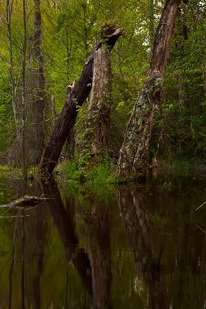 Hardwood forests behind this beaver pond near Mark's Creek, North Carolina.