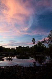 Wetlands near Mark's Creek, North Carolina.