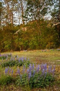 The sun just starts to light the trees near Mark's Creek, North Carolina.