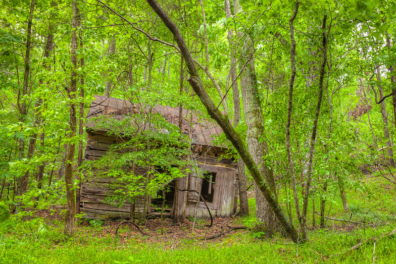 An abandoned cabin on the Buckquarter Creek Trail.  Eno River State Park, North Carolina.