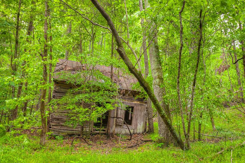 An abandoned cabin on the Buckquarter Creek Trail.  Eno River State Park, North Carolina.