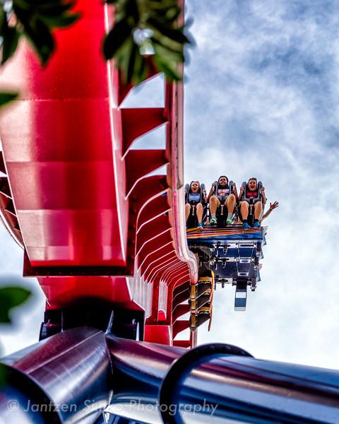 SheiKra - Busch Gardens Tampa