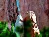 Full Frame 300mm Zoom Nikon N65 35mm<br /> Cropped