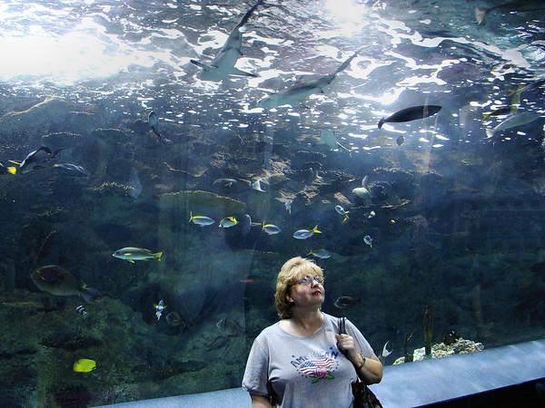 Jane in the Shark Tank_DSC00960a