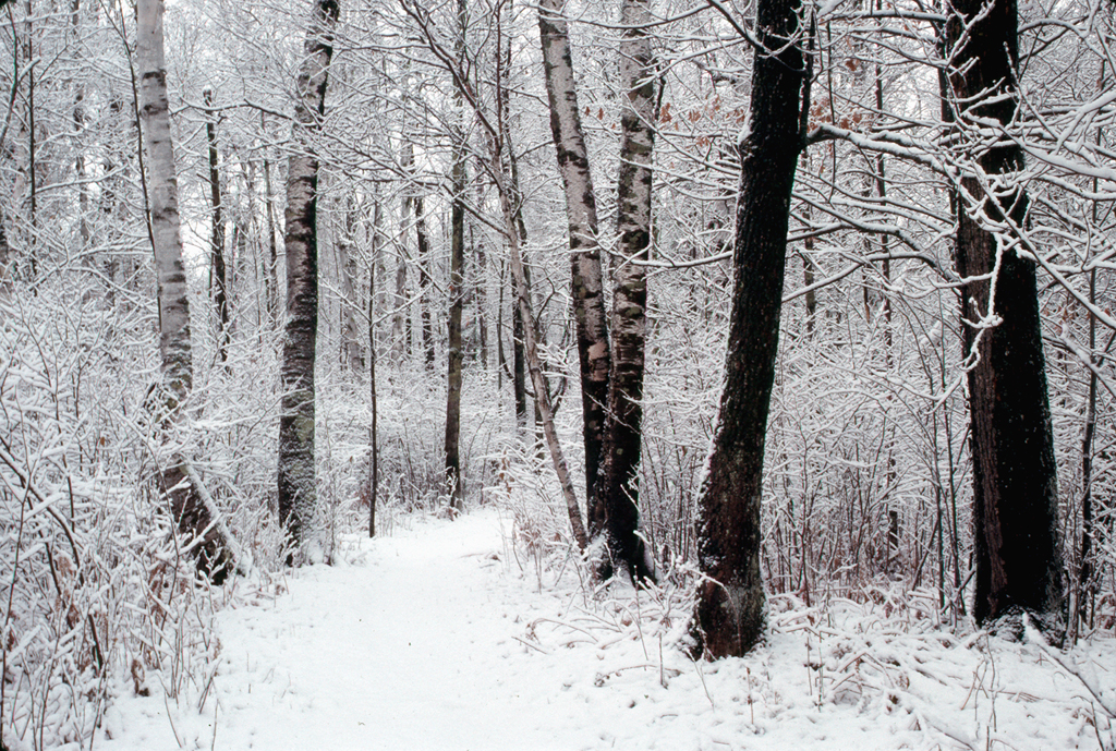 Portage in Winter