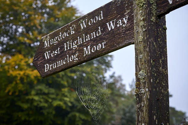 A fingerpost sign points back to the Way after a detour off the trail