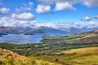 Sheep graze in the moorlands below Conic Hill, with Millarochy Bay, Inchlonaig, and Beinn Dubh beyond.  Scotland.