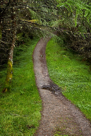 The Way continues through a dense conifer forest west of Crainlarich.  Scotland.