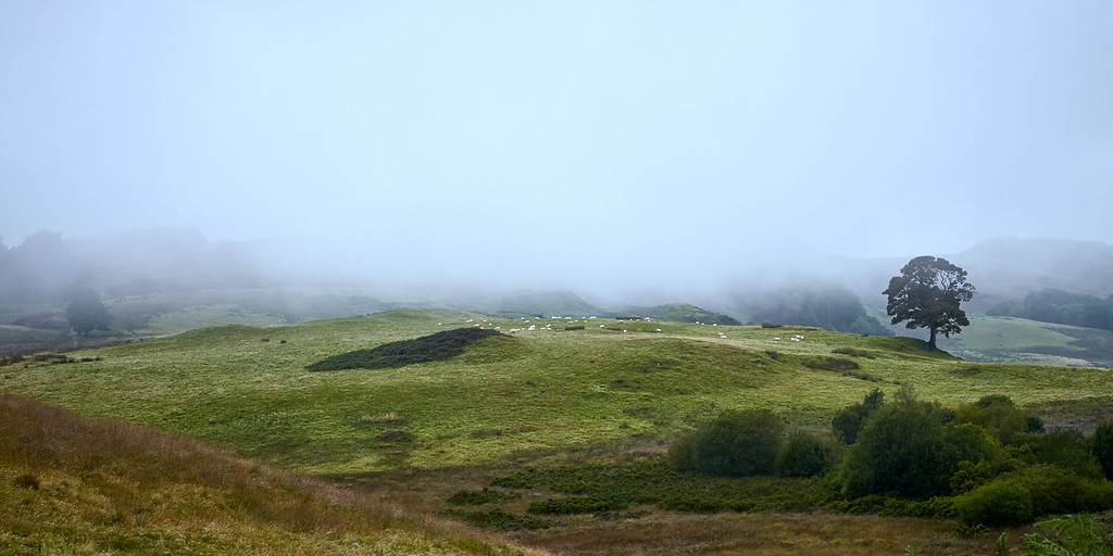 Low clouds settle over sheep grazing in Blane Valley.  Scotland.