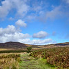 The grassy trail before going up Conic Hill.  Scotland.
