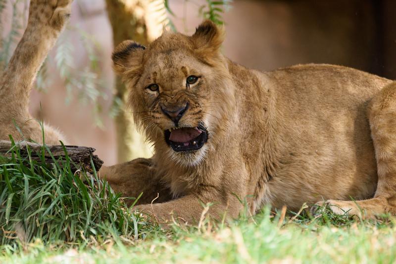 Wild Animal Park, San Diego, California