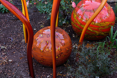 Chihuly Exhibit Glass Sculptures at the Denver Botanic Gardens