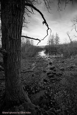 Hike, University of Wisconsin, Madison Arbortetum