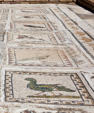 The mosaic on the floors of this old Roman house contain 35 species of birds.  Italíca, Santiponce, Spain.