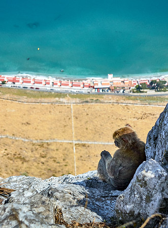 A Barbary macaque sits in the shade looking down on the beaches of Gibraltar.