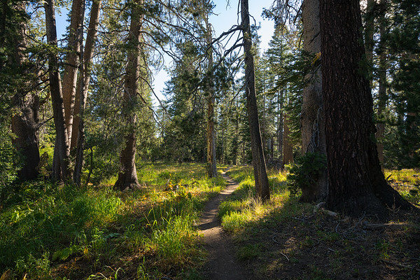 Trail to Dardanelles Lake