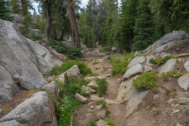 Hiking through the mixed forest on the trail back from Winnemucca Lake