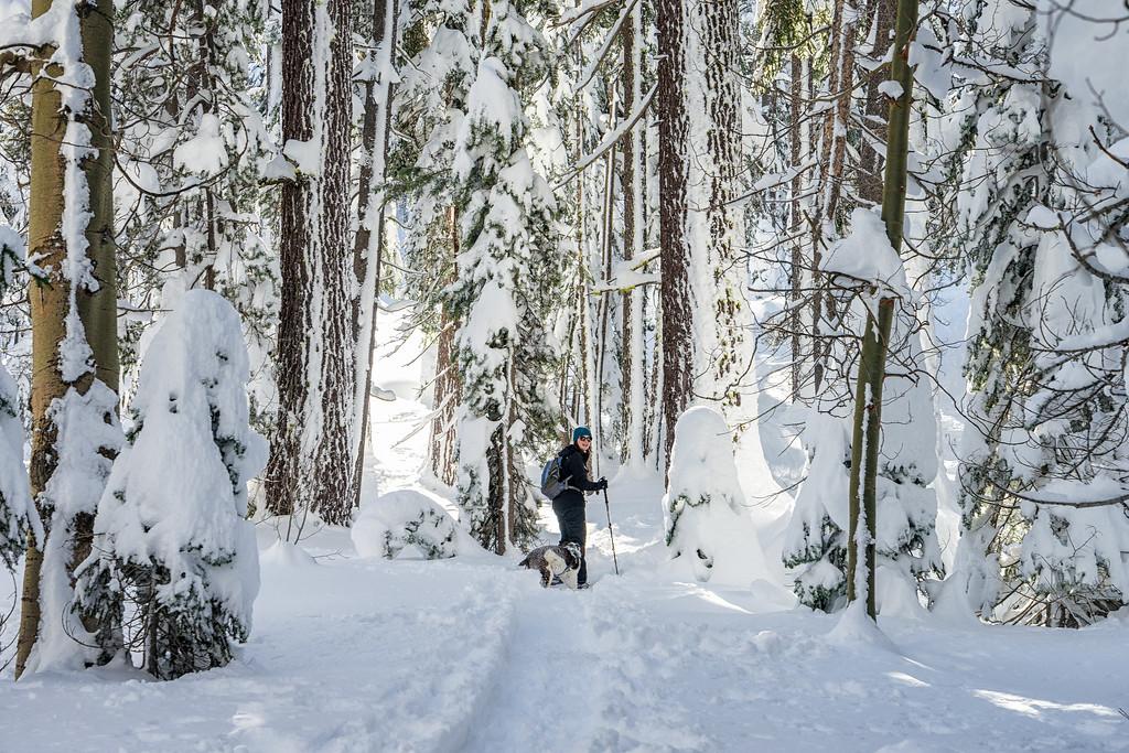 Snowshoeing in the treeline near Grass Lake