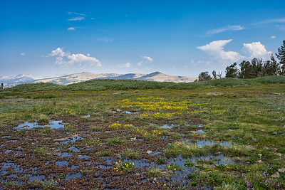 Wildflowers in snowmelt, looking south
