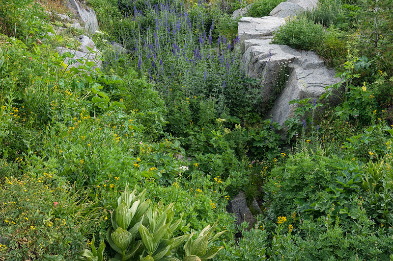 An assortment of wildflowers along a small creek on the trail to Fourth of July Lake