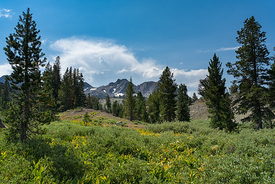 A view of The Sisters from the meadow entering the Mokelumne Wilderness.