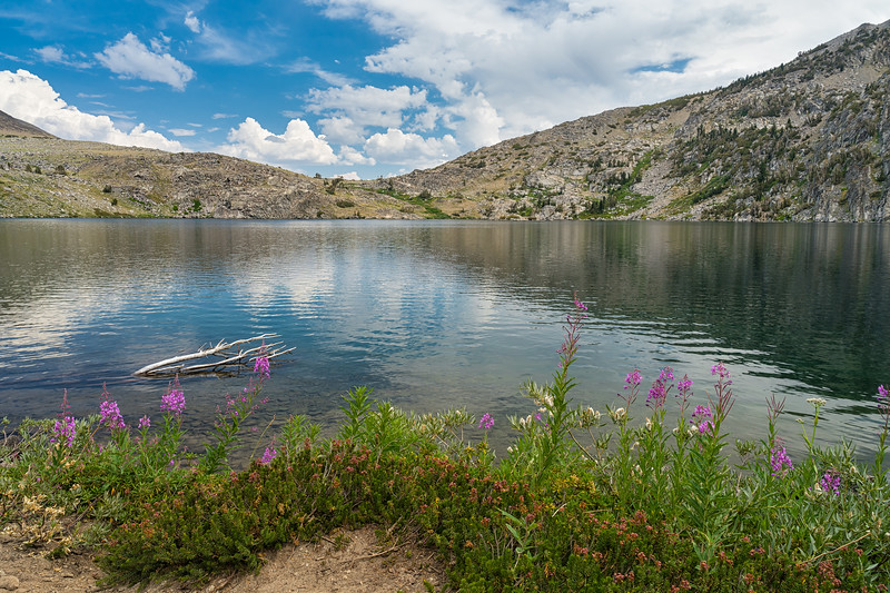 Wildflowers growing on the shore of Winnemucca Lake.