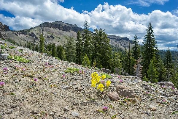 Wildflowers on the ridgeline looking at Castle Peak.