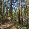 The trail to Chimney Beach from the Forest Service parking lot parallels Marlette Creek
