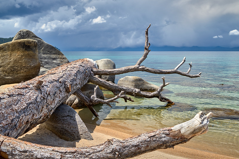 A fallen tree at Chimney Beach.