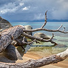 A fallen tree at Chimney Beach.