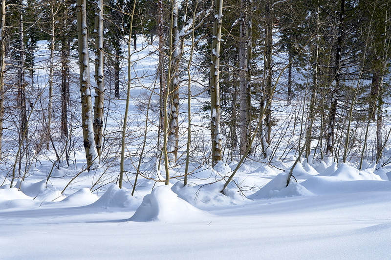 Snowscape along Angora Ridge Rd