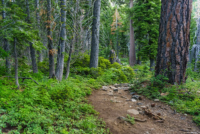 The trail to Floating Island Lake after departing the ridge.