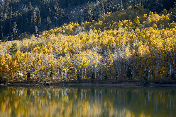 The morning sun begins to light up the changing aspens on the east shore of Marlette Lake.