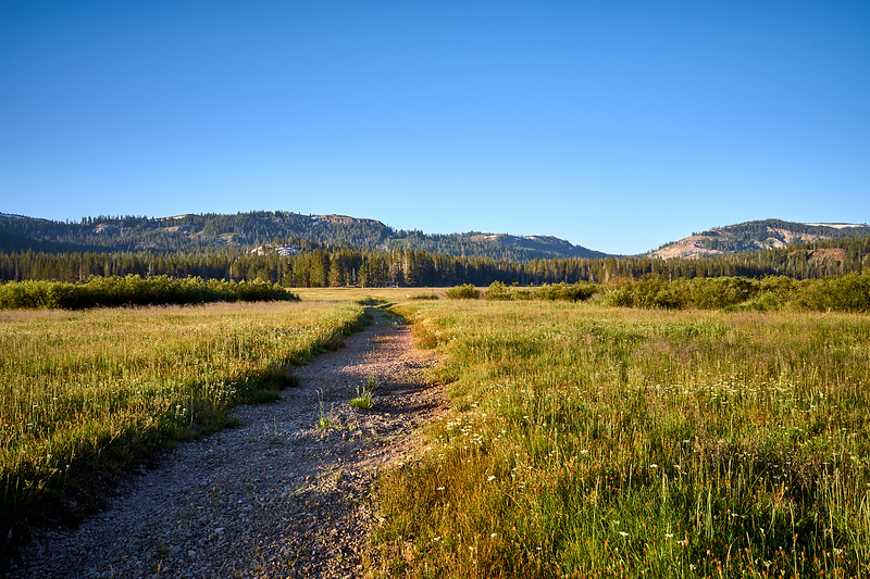 The trail through Lacey Meadow