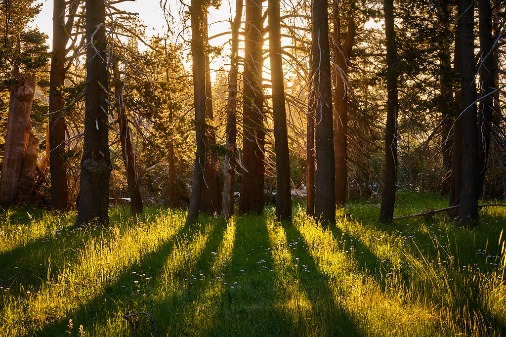 Morning rays through trees in Lacey Valley