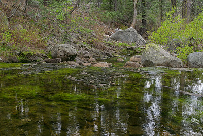 One of the forks of the Yuba River passing through an area of mixed vegetation along the Loch Leven Lakes trail.