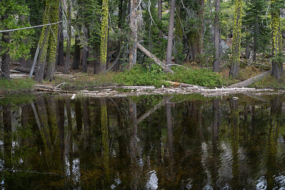 The small pond just over a half mile into the Loch Leven Lakes trail.