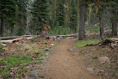 The Loch Leven Lakes trail passing through a mixed forest.