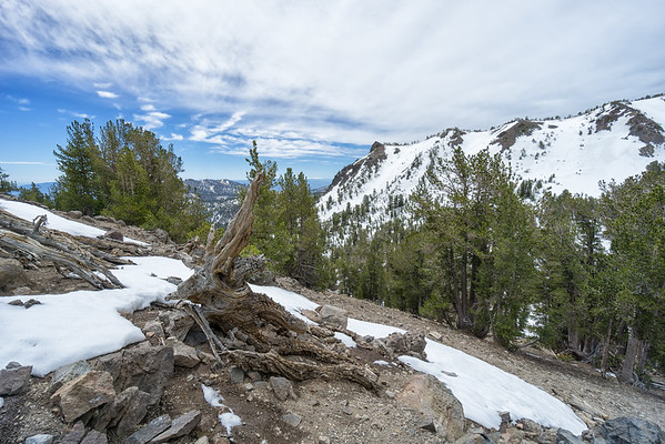 Looking south towards Tamarack Peak from the Mt Rose Summit trail.
