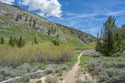 The Ophir Creek Trail continuing downhill on the south side of Slide Mountain