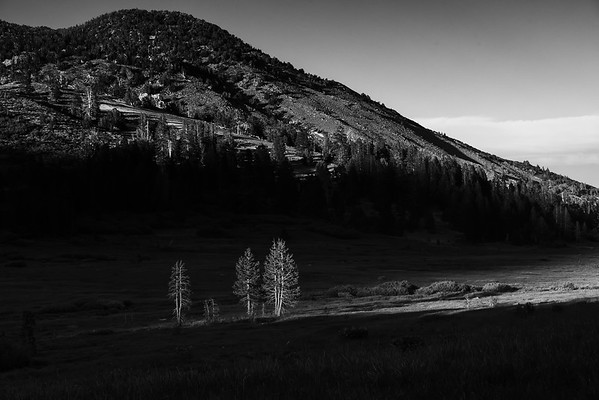 The last of the evening light hitting a small stand of trees in Tahoe Meadows.