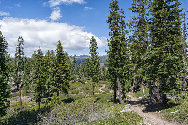 The Tahoe Rim Trail gently winding through pines, firs, and manzanita scrub near Spooner Summit.