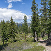 The Tahoe Rim Trail gently winding through pines, firs, and manzanita scrub near Spooner Summit.