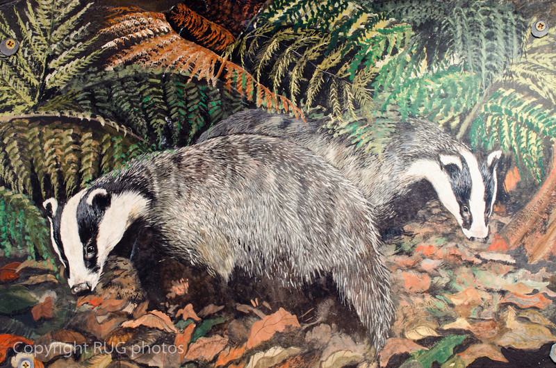 The walls were adorned by a remarkable collection of paintings featuring countryside wildlife including badgers. These were painted on large thick slabs of Welsh slate that were rescued long ago from an old manor house. The slabs were over an inch thick and huge!